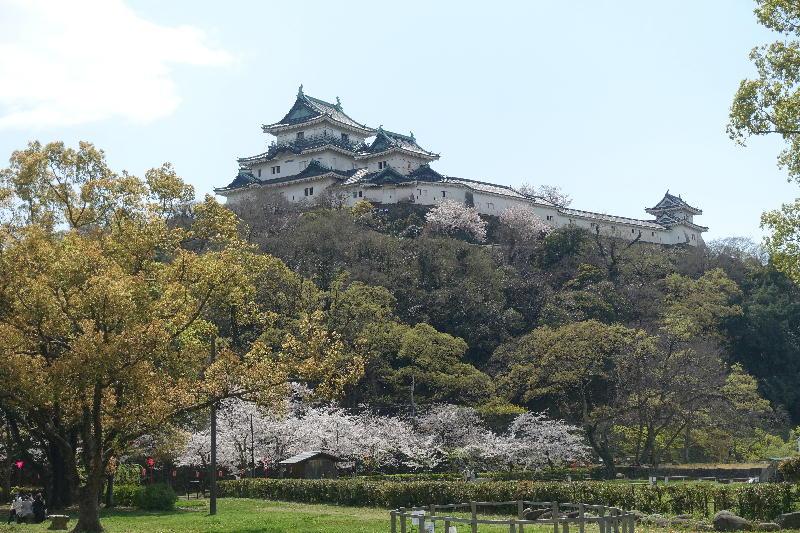 和歌山城、さみしい花見